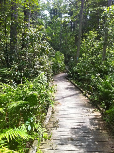 Nehantic Trail - Rhododentron Sanctuary Trail.